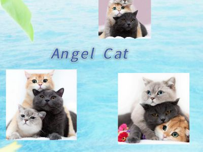 Angel  Cat 幻灯片制作软件