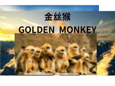 金丝猴 幻灯片制作软件