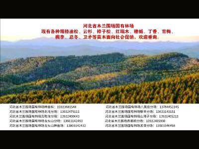 木蘭林場苗木銷售