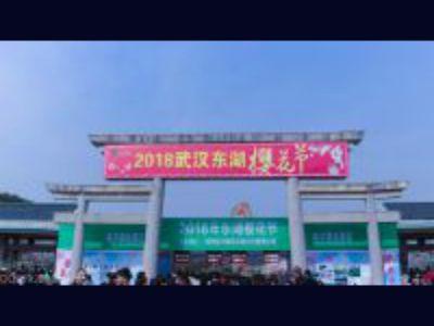 武汉的樱花 幻灯片制作软件
