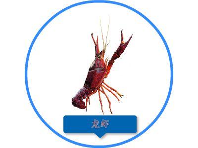 生物视频 幻灯片制作软件