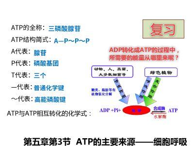 ATP的主要来源——细胞呼吸 幻灯片制作软件
