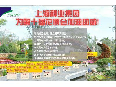 上海种业助力第十届花博会 幻灯片制作软件