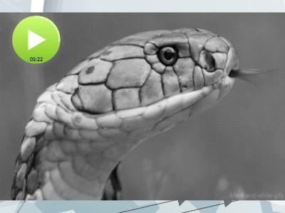蛇伤患者招募