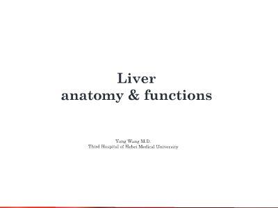 liver anatomy beta 幻灯片制作软件