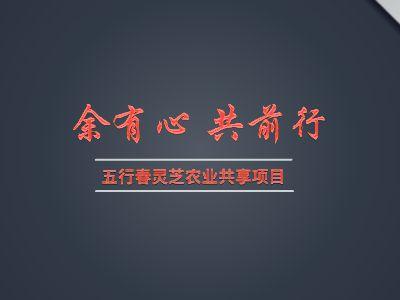 五行春灵芝农业共享项目 幻灯片制作软件