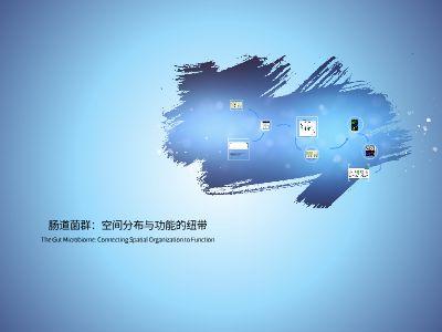 肠道菌群:空间分布与功能的纽带 幻灯片制作软件