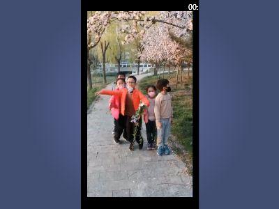 櫻花雨 幻燈片制作軟件