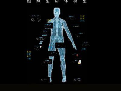 组织生命体理论介绍 幻灯片制作软件